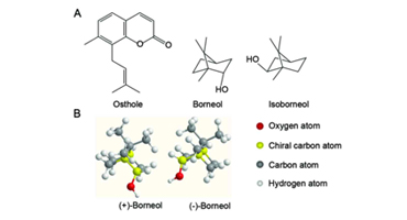 A New Source of Natural D-Borneol and Its Characteristic